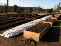 first-veggies-box-beds-and-raised-beds