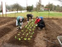 first-veggies-everyone-planting