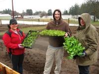 first-veggies-holding-trays