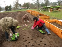 first-veggies-in-the-ground