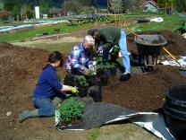 29april09-potting-up-tomatoes