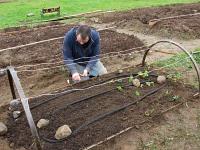 cloche baby planting