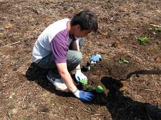 edmonds cc planting squash