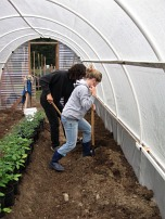hoophouse digging soil