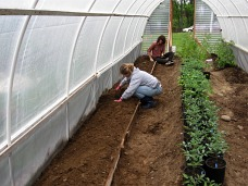 hoophouse making edges on beds