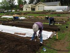 planting leeks lettuce mesclun