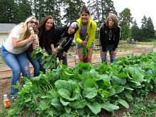 Bayview student harvest