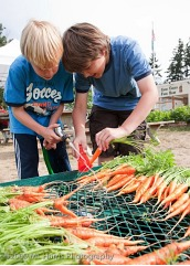 ml harris kids washing carrots