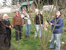 pruning fruit trees_6495