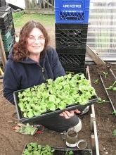 lettuce starts february_4120