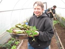 MLK Day lettuce harvested hoophouse_3904