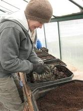 soil blocks making_4192
