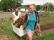 camille and alexa harvesting lettuce_5463