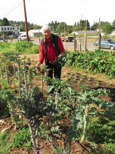 kale harvest loretta_1448