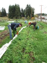 carrots last harvest_0894