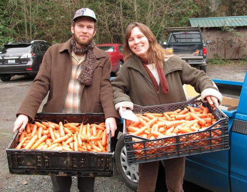 carrots deep harvest winter2014_3095