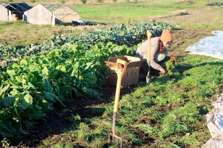 Greenbank Farm carrots_7616