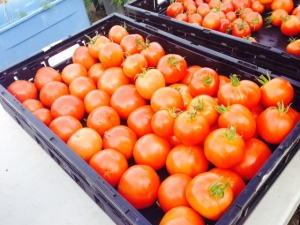 2015 was an outstanding year for tomatoes.