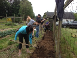 Bastyr Naturopathic students flipping a new bed at Bayview Garden in May.