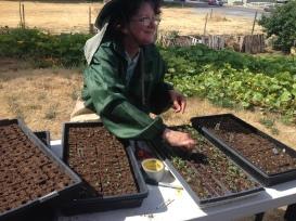 Jenny, our seedling transplanting expert.