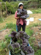 Anh proudly displaying some beautiful chinese cabbage, spring 2015