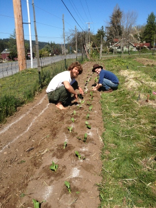 Devin and Stoni planting bok choi