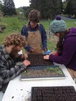 Devin and Liza pot up lettuce, while Stoni supervises.