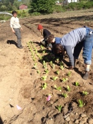 Liza, Stoni, Abigail, and Anna helping to plant lettuce at the Big ACRE
