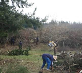 Intrepid volunteers clearing invasive weeds
