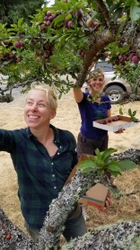Interns Corey and Lola pick plums