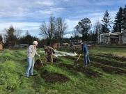 More volunteers turning in cover crop!